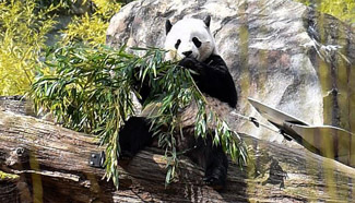 Washington's National Zoo kicks off events to send off Giant Panda Bao Bao