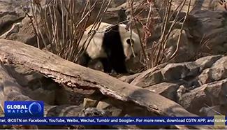 Washington D.C. says goodbye to panda Bao Bao