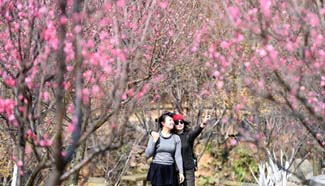 Pretty in pink: Plum blossoms seen in east China