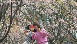 Blooming cherry blossoms attract visitors in SW China