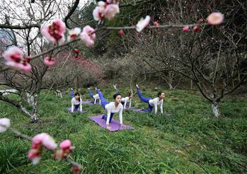 Yoga lovers practise yoga at plum garden in C China