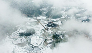 In pics: snow-covered tea garden in C China's Hubei
