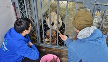 U.S.-born panda to stay in SW China's quarantine for month