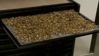 Belgium is building its own Insect Village