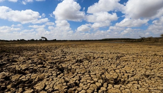 Kenya faces severe drought: FAO