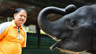 In pics: elephant-related entertainments in Thailand