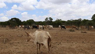 Herders enter private Mugie wildlife conservancy without permission in Kenya