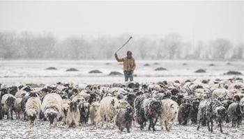 Heavy snowfall hits parts of Tibet