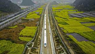 High-speed train runs along cole flowers in SW China