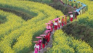 Cheongsam fans walk on terrace fields of cole flowers in E China city