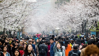 People enjoy cherry blossoms in E China's Nanjing
