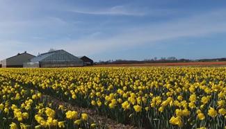 Let's enjoy beautiful spring in Lisse, Netherlands