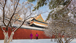 Snowfall hits Hohhot, north China