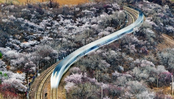 Spring scenery of peach flowers near Juyongguan Pass of Great Wall