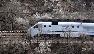 Train runs amid flowers near Juyongguan Pass in Beijing