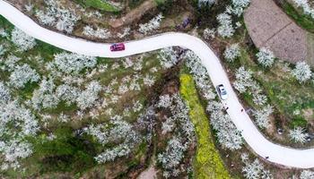 Spring flowers in full blossom across China