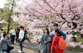People enjoy cherry blossoms in Tokyo
