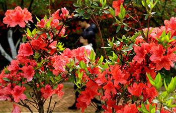 Tourists enjoy azalea flowers on 2nd day of Qingming Holiday