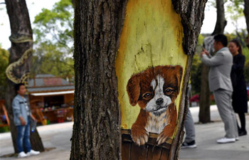 "Fantastic ""tree paintings"" seen in east China's Anhui"