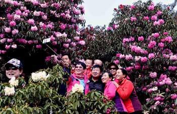 Tourists enjoy azalea blossom in China's Yunnan