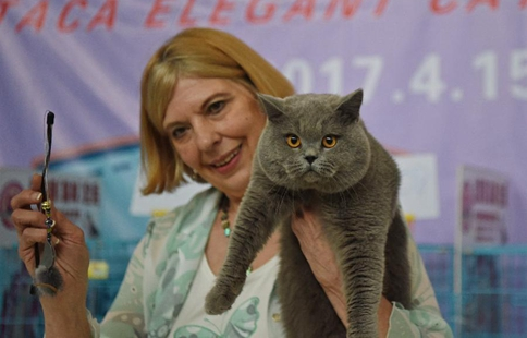 Cat show held in NE China's Shenyang