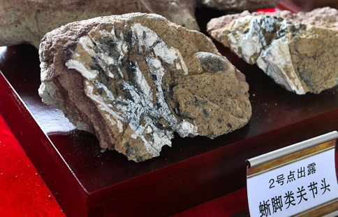 Systematic excavation of dinosaur fossils launched in NE China