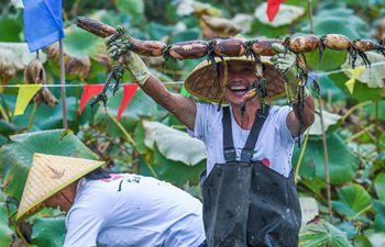Local people celebrate harvest of lotus roots in E China
