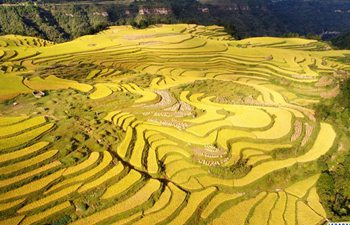 In pics: paddy fields across China