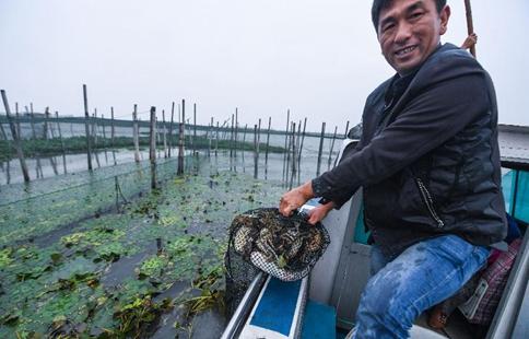 Breeders embrace harvest season of Taihu crabs in E China