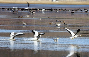 Birds attract tourists in SW China's Napa Lake Wetland during winter time