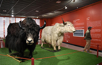 Exhibition on Tibetan yaks held in Guangzhou
