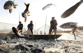 People in China's Jiangsu catch fish to meet market demand ahead of New Year
