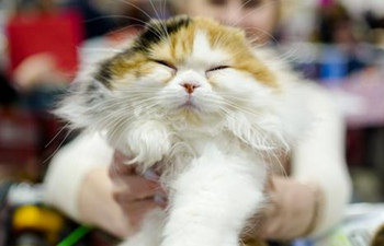 Highlights of KoShariki Cat Show in Moscow