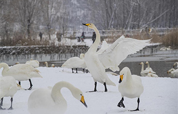 North China's Swan Lake witnesses 1st winter snowfall