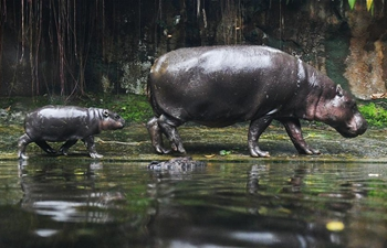 Media tour of newborn animals held at Singapore Zoo