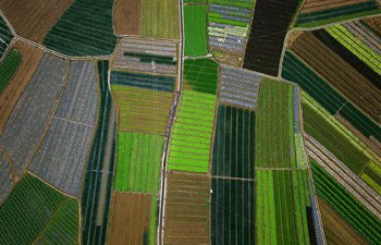 Aerial view of vegetable bases in Guangxi