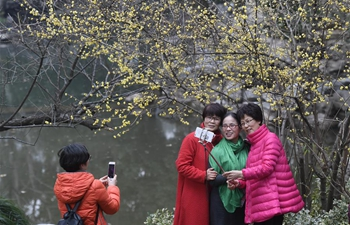 Plum blossoms in Hangzhou, E China's Zhejiang