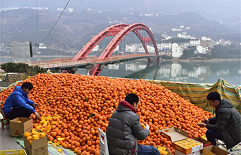 In pics: China's hometown of navel oranges