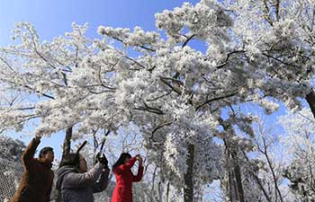 Rime scenery in Jinan, east China