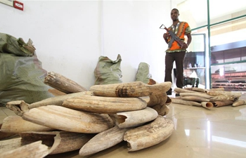 Tanzania auctions 3,580 kg of hippo teeth