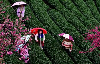 Cherry blossoms in flower season draw visitors in Fujian