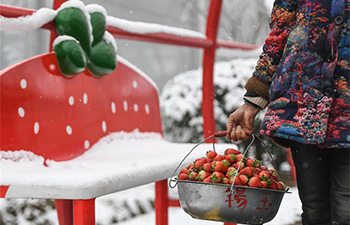 Strawberry plantation draws tourists in east China's Zhejiang