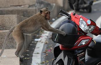 Naughty monkeys in east Thailand's tourist area