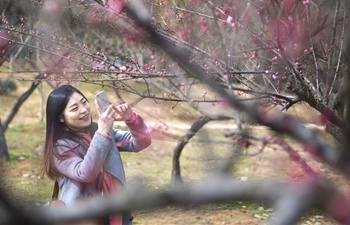 People enjoy plum blossom in Wuhan