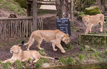 Annual stocktake starts at ZSL London Zoo