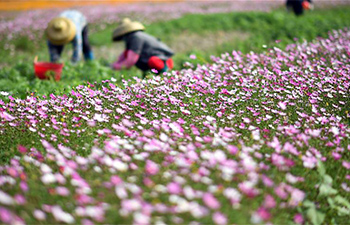 In pics: Qiongbei grassland in south China's Hainan