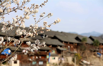 Pear blossoms seen in county of SW China's Guizhou