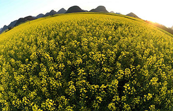 In pics: rape flowers in Luoping, China's Yunnan