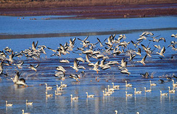 Migrant birds seen at national nature reserve in SW China's Yunnan