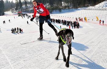 A look at Latvian sled dog winter championships 2018
